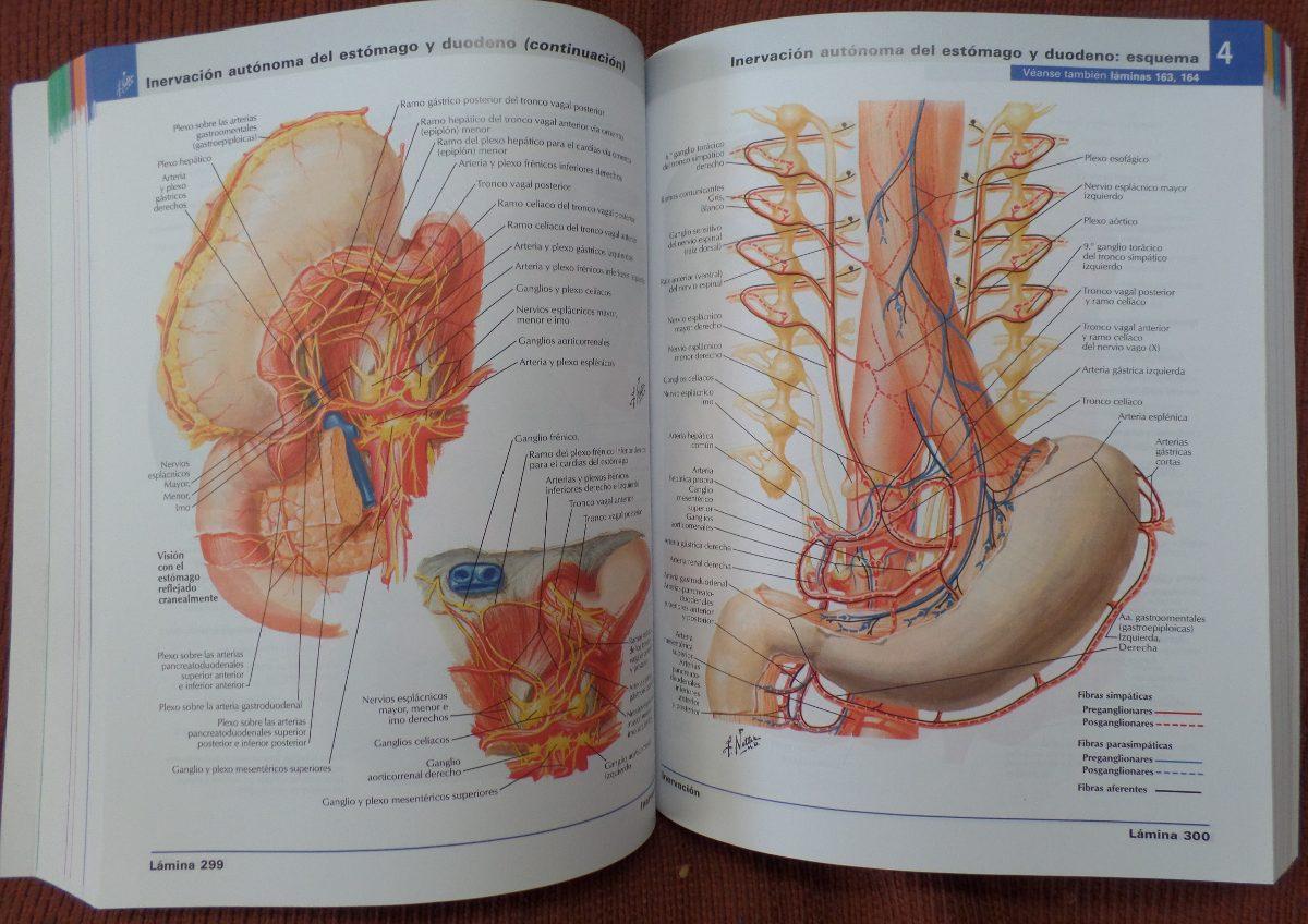 Vistoso Francas Atlas Netter Anatomía Modelo - Anatomía de Las ...