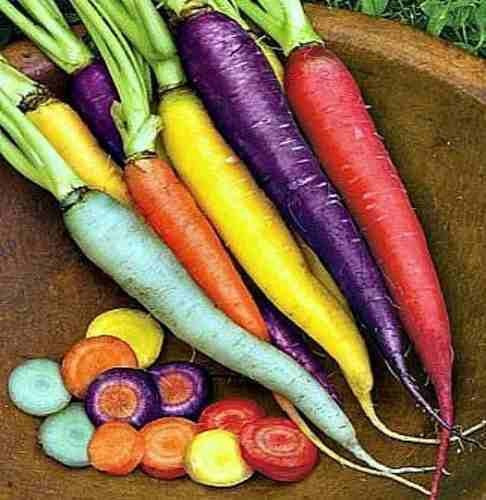 zanahorias de colores mix 7 variedades orgánicas
